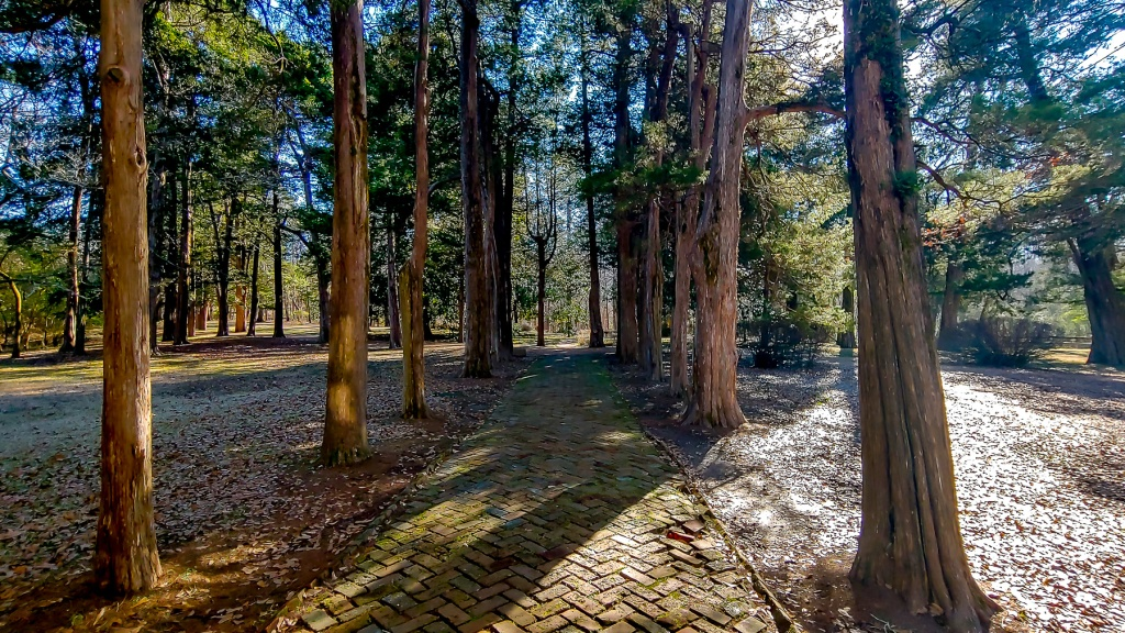 The herringbone brick walkway that is lined with cypress trees at Rowan Oak.  The home of William Faulkner.